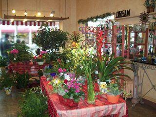 Saville flowers