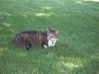 Yama, with mouse in grass